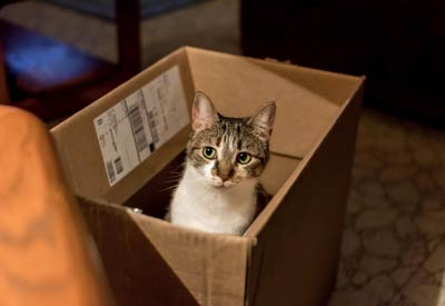 Cat Sitters Raleigh