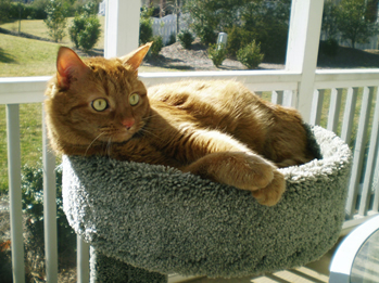 Raleigh Cat Sitter Rates Brier Creek Wake Forest