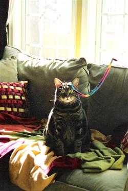 Professional cat sitters