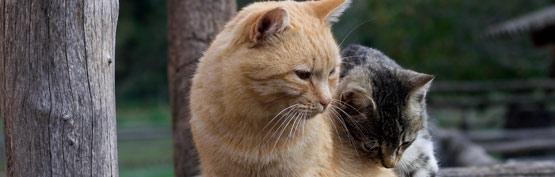 Custom Cat Care from Sleepeas..zZ - Pet & House Sitting - Raleigh, NC