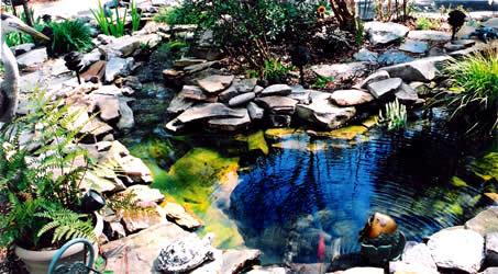 Home Pond care