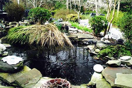 aquatic pond care
