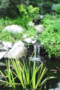 Pond care, raleigh nc