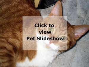 View Pet Slideshow